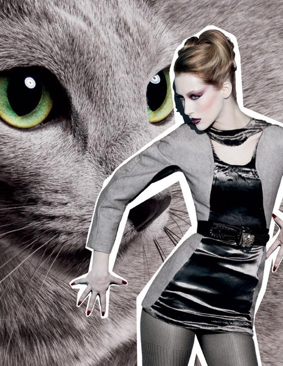 Fabulous-Felines-Palace-Pedigreed