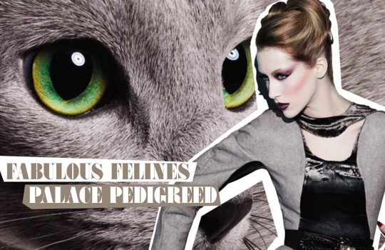 MAC-Fabulous-Felines-Palace-Pedigreed-1